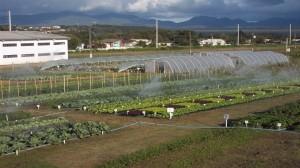 Área Experimental de Olericultura Orgânica
