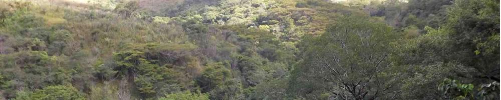 slider floresta 01